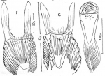 Microdalyellia fairchildi