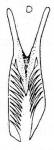 Microdalyellia circulobursalis