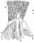 Gieysztoria beltrani