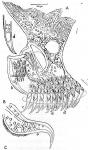 Gieysztoria intricata