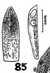 P. chloroxantha