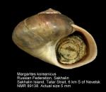 Margarites koreanicus