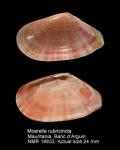 Moerella rubicincta