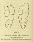 Bulimina ariminensis d'Orbigny in Fornasini, 1901