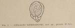 Lituonella buliminaeformis Allix, 1922