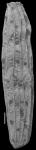 Amphimorphina ignota Cushman & Siegfus, 1939 Holotype