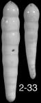 Nodosarella inaequalis (Silvestri, 1901) Identified specimen