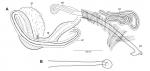 Limnodrilus hoffmeisteri (neotype; penial sheath)