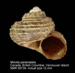 Solariella peramabilis