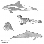 Mammalia (mammals)
