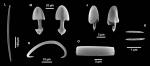 Esperella crassissima holotype spicules