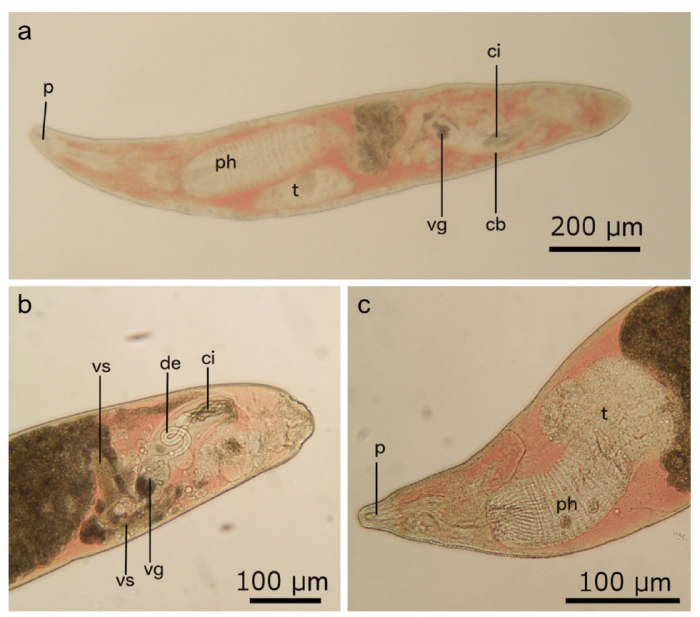 Fig. 3 (Gobert et al., 2017)