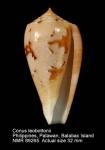 Conus leobottonii