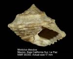 Modulus disculus