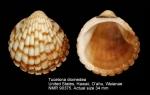Tucetona diomedea