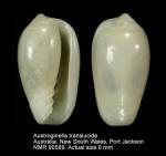Austroginella translucida