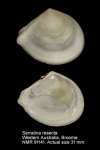 Serratina resecta