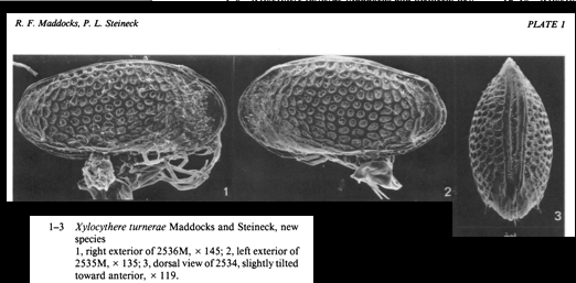 Xylocythere turnerae Maddocks & Steineck, 1987 from original description Pl 1