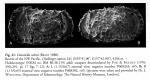 Dutoitella suhmi (Brady, 1880) Lectotype from Mazzini 2005 Fig.41