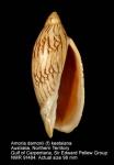 Amoria damoni damoni f. keatsiana