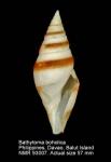 Bathytoma boholica