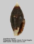 Mitromorpha fischeri