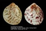 Acrosterigma hobbsae