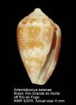 Artemidiconus selenae