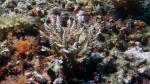 Acropora tenuis DMS