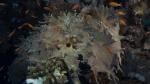 Lobophytum pauciflorum Hand coral2 DMS
