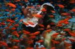 Pseudanthias squamipinnis sea goldies1 DMS