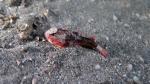 Richardsonichthys leucogaster WhitefaceWaspfish1 DMS