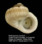 Bothropoma mundum