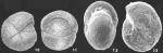 Cribrostomoides bradyi Cushman identified specimen
