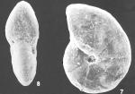 Cyclammina trullissata (Brady) identified specimen