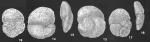 Tritaxis primitiva Bronnimann & Whittaker identified specimens