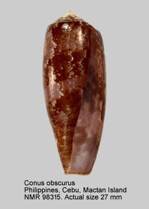 Conus obscurus
