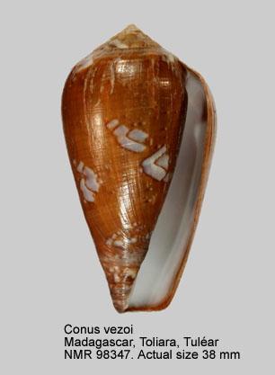 Conus vezoi