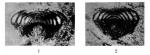Lasiodiscus granifer Reichel, 1946