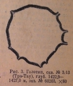 Parathurammina dagmarae Suleymanov, 1945