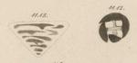 Tetrataxis conica Ehrenberg, 1854