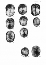 Staffella sphaerica (Abich, 1859)