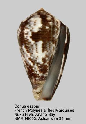 Conus easoni