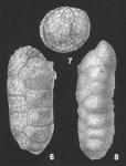 Ruakituria magdaliformis (Schwager) identified specimens
