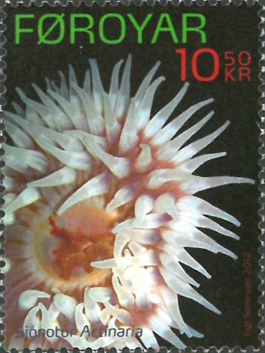 Actiniaria sp.