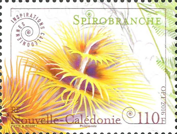 Spirobranchus sp.