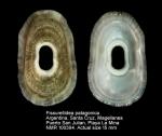 Fissurellidea patagonica
