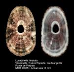 Lucapinella limatula