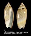 Agaronia adamii