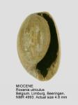 Roxania utriculus